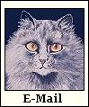 E-mail Button-gray cat